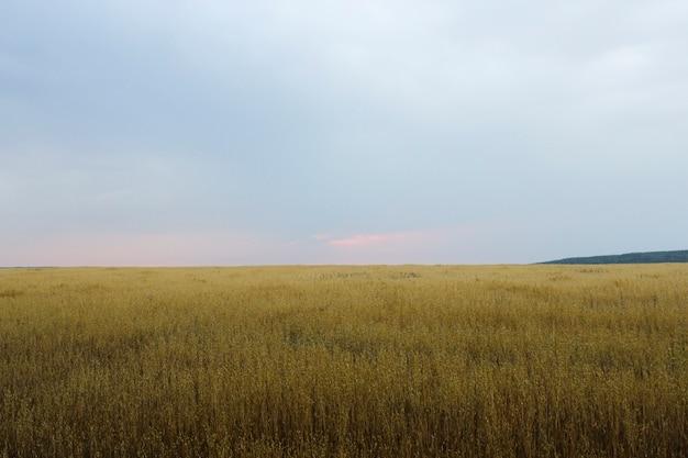 曇りの中で果てしなく続く野原を望む風景