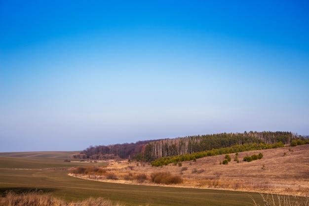 遠くの野原と森を望む風景