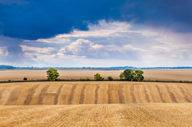 Пейзаж с пшеничным полем и темным грозовым небом
