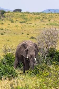 Пейзаж со слоном на переднем плане
