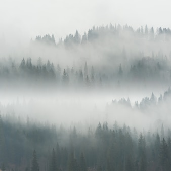언덕에 숲에서 아름 다운 안개와 풍경