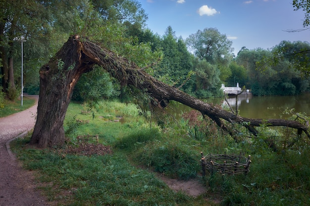 Landscape with a broken tree by the lake and an old marble bridge, soft focus, stylized