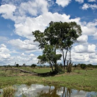 曇りの青い空と木、タンザニア、アフリカのある風景します。