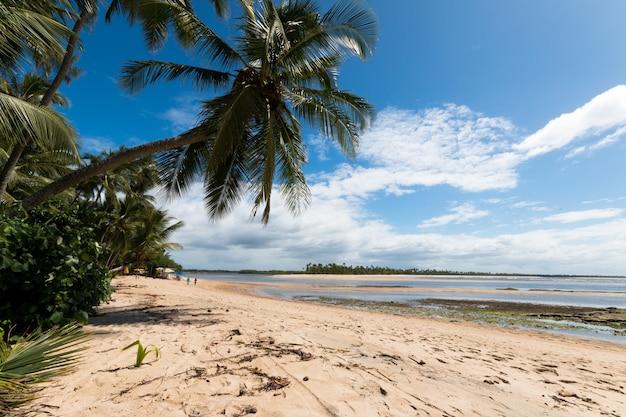 Boipeba 바이아 브라질 섬에 코코넛 야 자 해변 풍경.