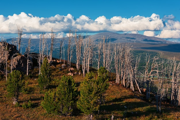 Landscape with dead forest on the mountain pass, height over 2000 meters, in the mountains in altay