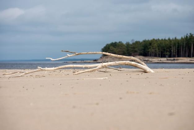 ビーチの砂に枯れ木のある風景します。