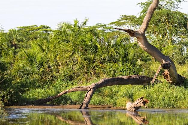 Пейзаж с сухим деревом. серенгети, танзания