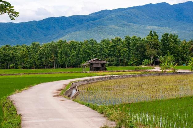 태국에서 필드 쌀, 주택 및 산 전망 풍경.