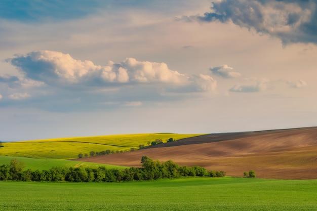 들판과 하늘 풍경; 젊은 밝은 잔디와 그린 필드