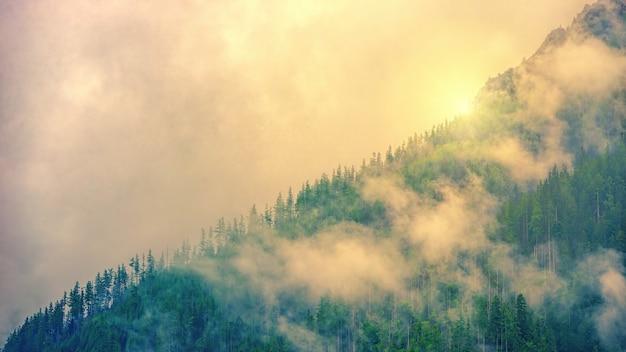 霧と森のある風景