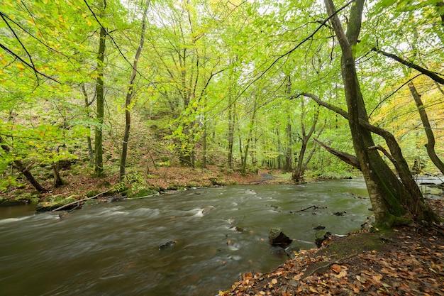 숲과 강 앞에 풍경. 아름다운 풍경