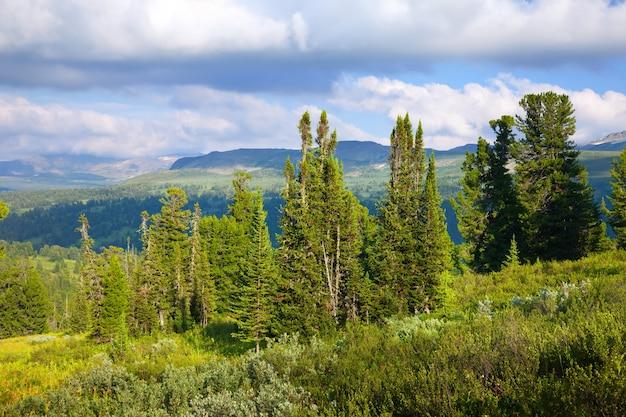 Пейзаж с лесными горами