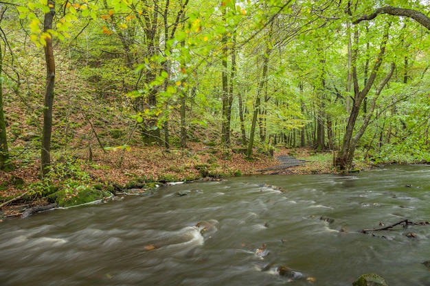 Landscape with forest and a river in front. beautiful scenery