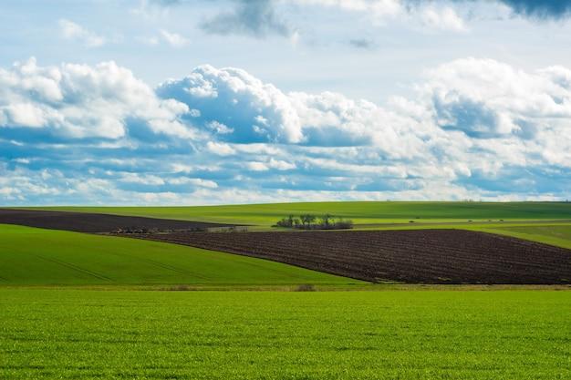 잔디와 하늘 풍경