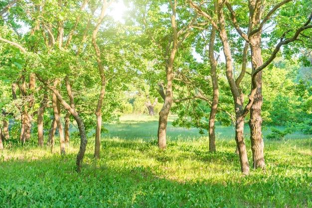 緑の森と美しい自然のある風景