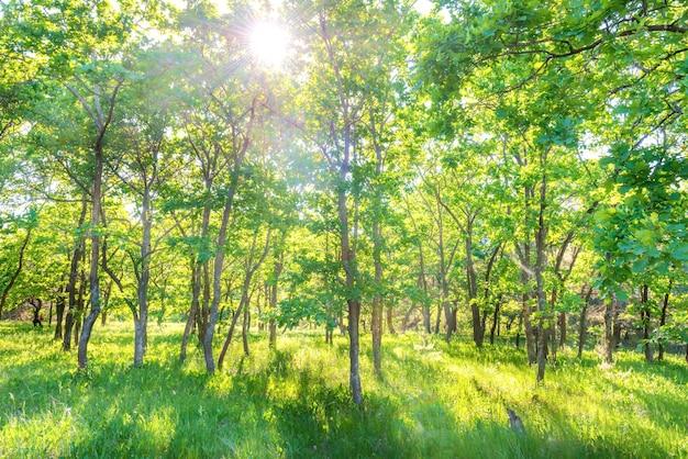 Пейзаж с зеленым лесом и красивой природой
