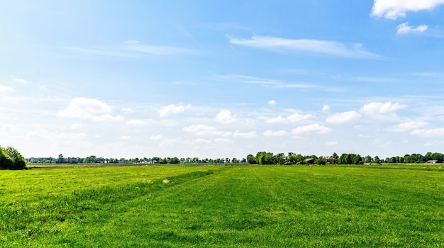Landscape with green grass field in netherlands