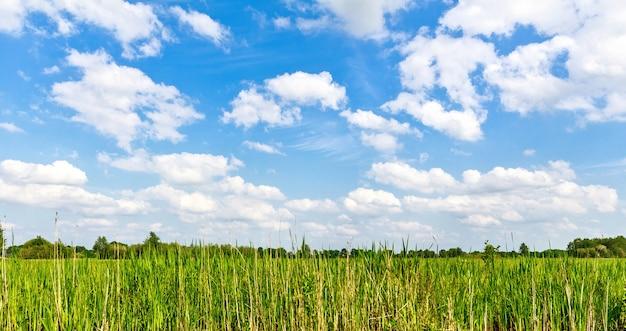 Landscape with green grass field in netherlands Premium Photo