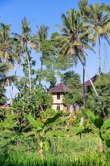 인도네시아 발리 섬 우붓의 화창한 날 푸른 야자수와 석조 집이 있는 풍경. 자연과 여행 개념