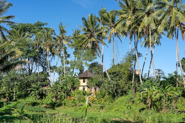 우붓, 발리 섬, 인도네시아에서 맑은 날에 녹색 야자수와 돌 집 풍경
