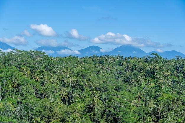 인도네시아 발리 섬의 화창한 날 푸른 논, 야자수, 아궁 화산이 있는 풍경. 자연과 여행 개념