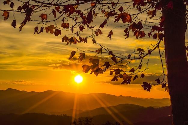 Пейзаж с кленовыми листьями на закате. платан