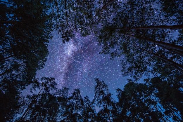 나무 위에 은하계와 풍경. 별 밤 하늘. 긴 노출 사진.