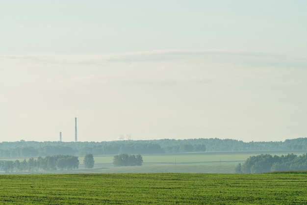 耕作地の霧のある風景