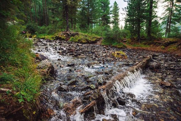 Пейзаж с горным ручьем в лесу