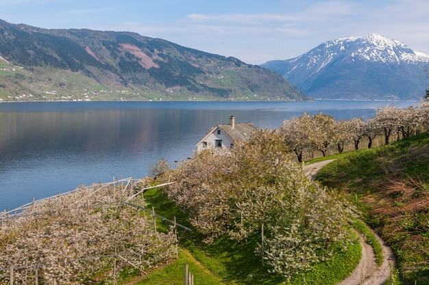 Landscape with mountains.  village in norwegian fjords