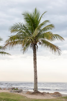 Landscape with palm tree highlighted and the sea line in the background