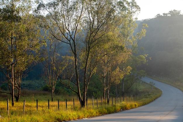 早朝の光の中で道路、フェンス、木のある風景します。ブラジル。
