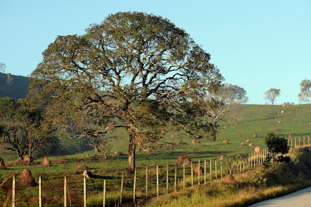 Пейзаж с дорогой, забором и деревом в свете раннего утра. brasil.