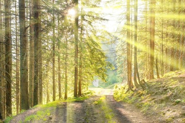 Пейзаж с дорогой в зеленом лесу и лучами солнечного света