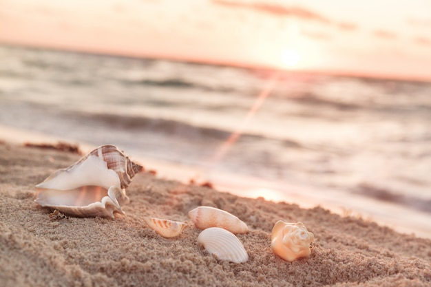 Landscape with shells on tropical beach at sunrise