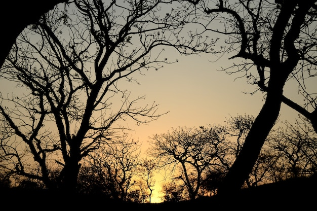 Landscape with silhouette of trees at sunset. back light landscape,