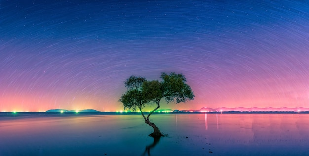 Landscape with star trail over silhouette mangrove tree in sea
