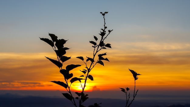 Пейзаж с закатом фоном и силуэтом цветов дерева