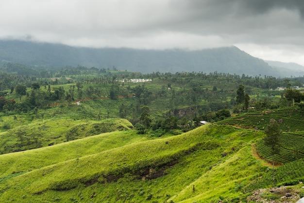 Landscape with tea plantations in highlands, sri lanka.