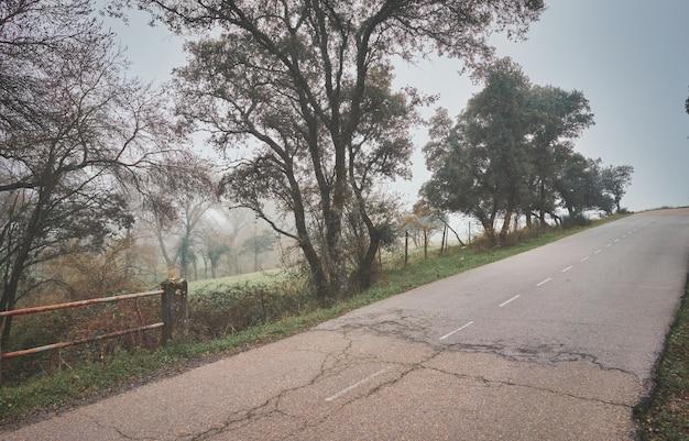 夢のような雲霧林のトレイルと風景10月の自然な背景の紅葉