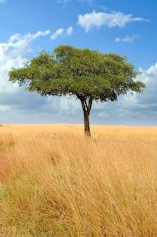 Пейзаж с деревом в африке Бесплатные Фотографии