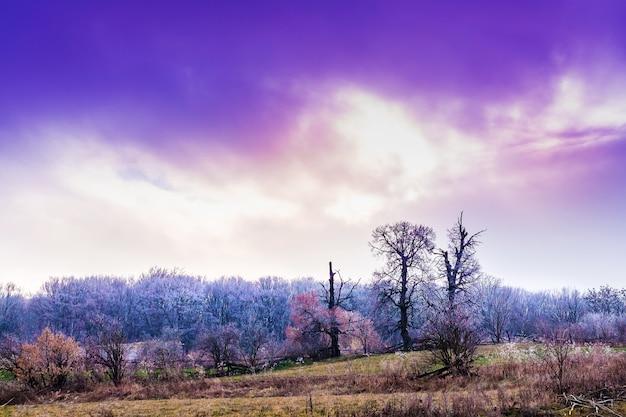 朝日が昇る朝、霜に覆われた木々のある風景