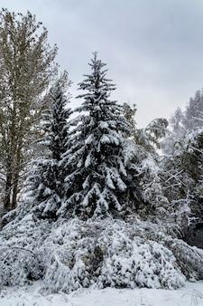 Пейзаж с деревьями, засыпанными снегом. погода, климат, смена времен года.