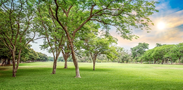 Пейзаж с деревьями на время заката