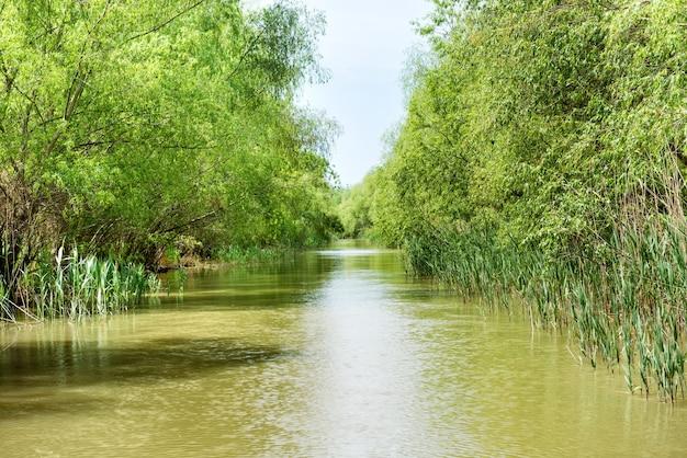Пейзаж с тропической рекой, джунглями и зеленым лесом на берегу