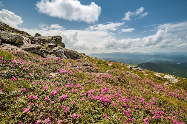 山と雄大な空に野生の花のある風景