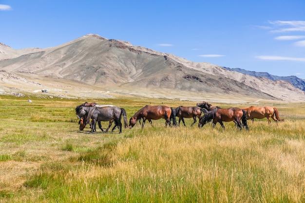 Пейзаж с дикими лошадьми у горы. алтай, монголия
