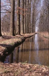Landscape, woods