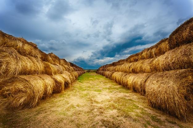 収穫後のフィールドで干し草のlandscapeのある風景