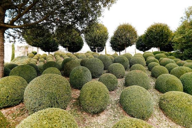 프랑스에서 가까운 회양목 공이있는 조경 된 정원. 녹색 분야. 프리미엄 사진
